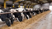 US milk production in August up 2%, as cow numbers remain steady