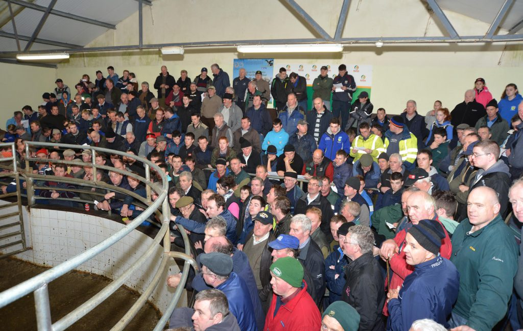 A packed ring at Balla Mart for the Charity Auction in conjunction with the special springer sale.