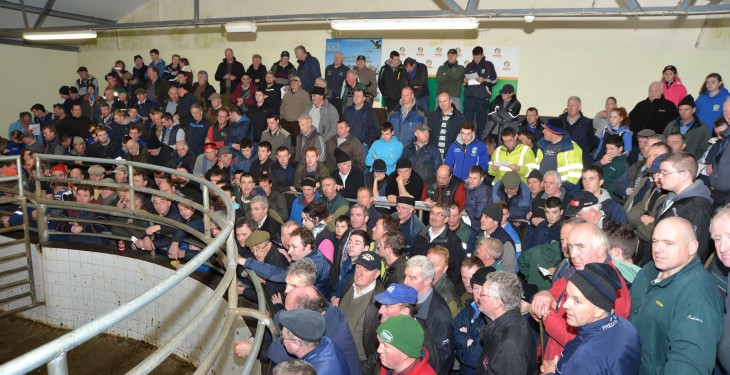 Blessington Mart to host 'Special Texel In-lamb sale'