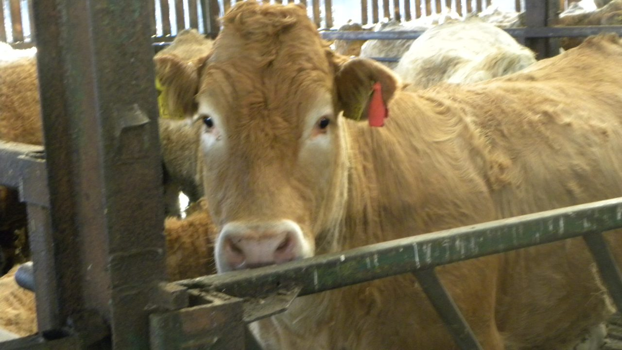Irish live cattle exports to Britain drop by 50% in 2015 – Minister Coveney