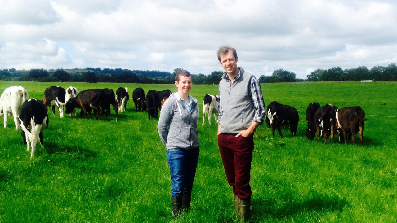 Video: An 800-dairy-cow herd features on tonight's Ear to the Ground