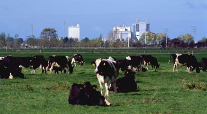 New Zealand dairy cows are producing 18% more milk than 10 years ago