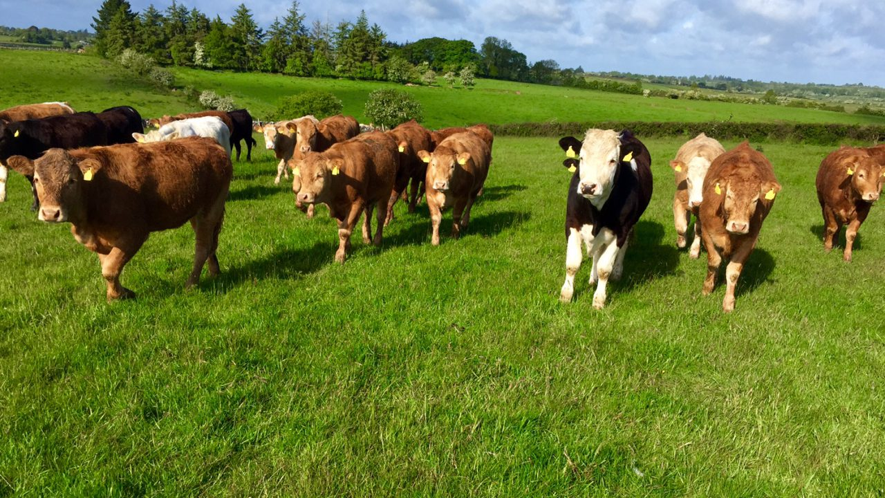 Has Ireland missed the boat with beef exports to the US?