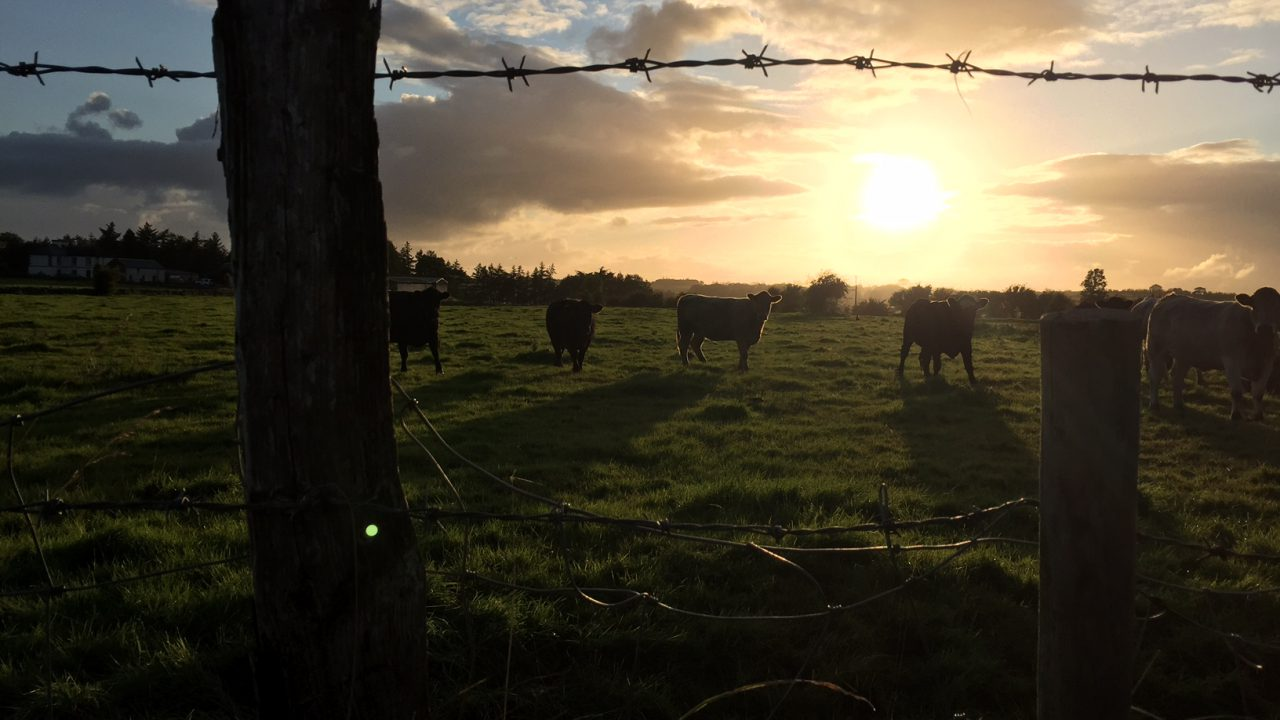 A mixture of fog, rain and sunny spells for the week – Met Eireann