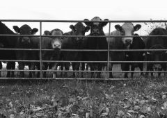 Survey: Farmer respondents single out 'biggest threat to farming'