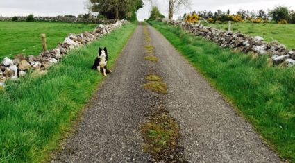 There's more wet and windy weather on the way – Met Eireann