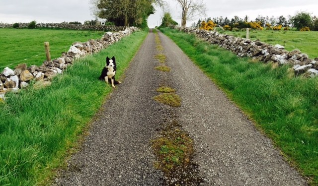 New €84m fund to fix rural roads this year (See how much your county got)