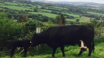'Health will be the limiting factor to cattle production in future years'