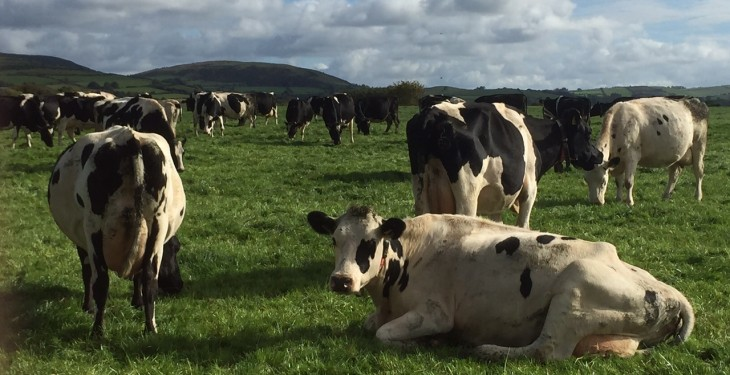 Up to two weeks extra grass on dairy farms this winter – Teagasc PastureBase
