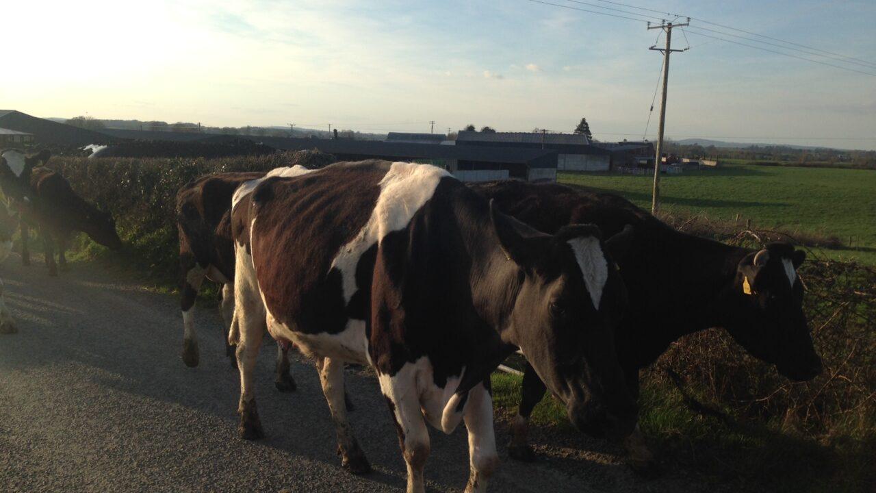 'Prosperity through productivity': New automated milk sensor makes Irish debut