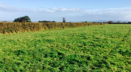 Review on hedgecutting dates due 'within the next fortnight'