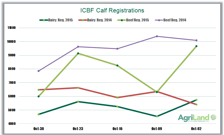 icbf-calf-registrations