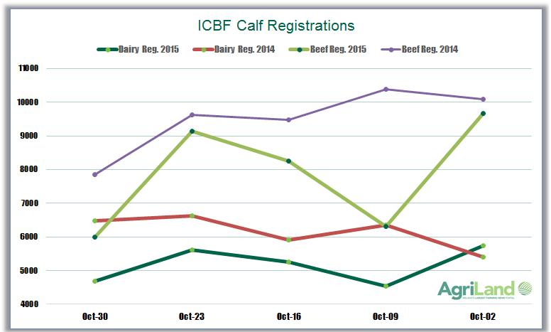 icbf-calf-registrations