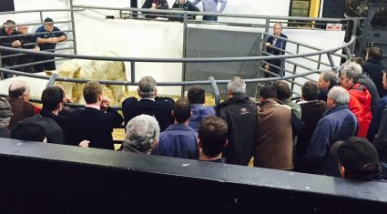 Cattle Marts – Plain lots a little easier but heavy lots still selling to €900 over