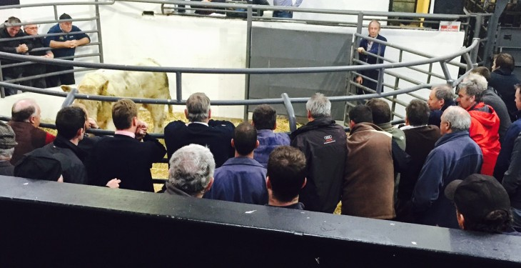 'Farmers have real fears around the lack of competition in beef processing'