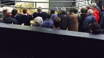 Marts report hundreds of farmers have stopped paying levies, but many waiting on IFA action