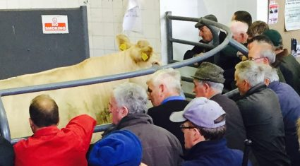 Cattle marts – Steady trade for all lots but farmers remain active around the ring