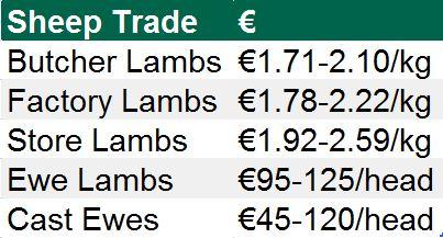 sheep trade 09112015
