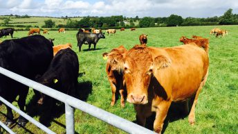 Half of Irish drystock farms earn less than €10,000