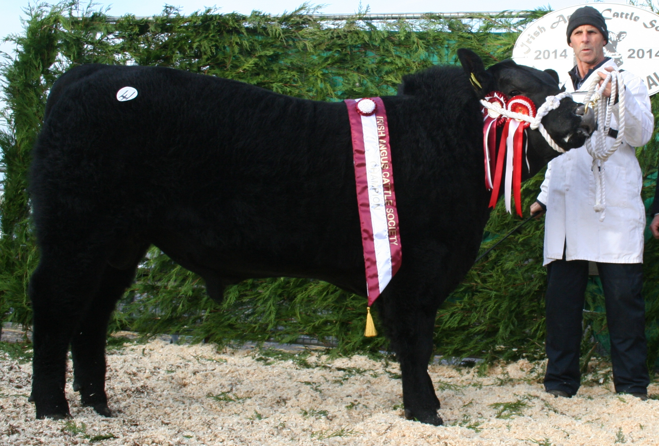 2014 male champion - Portanes K Black Buster, sold €4,700