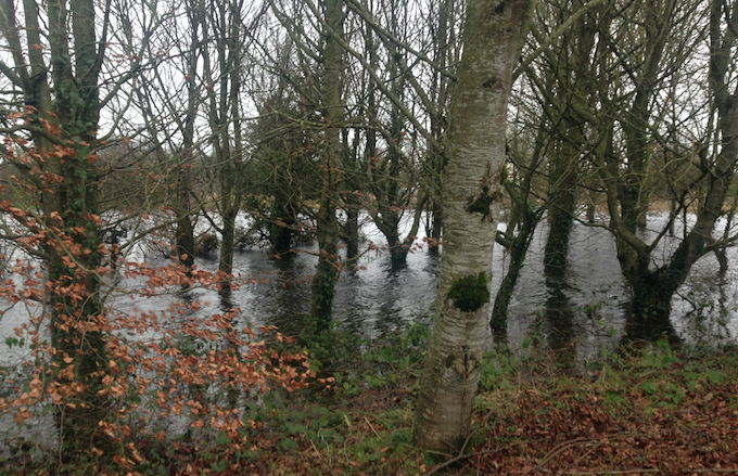€1,700/hectare available to land owners who had forests damaged due to storms