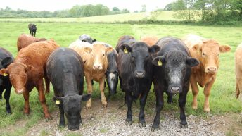 Massive climb in live cattle exports in 2017