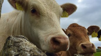 Animal welfare a 'growing consideration' for consumers