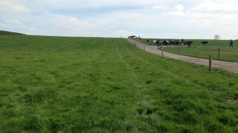 'Educating those not at the Dairy Conference about grass utilisation is the challenge'