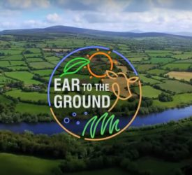 Video: Ear to the Ground focus on organic beef farming