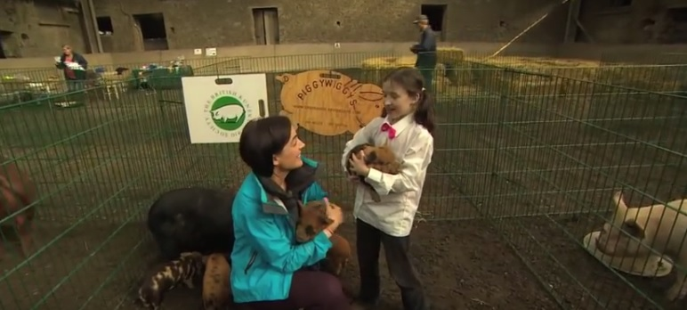 Video: Pigs and a playschool on a dairy farm feature on Ear to the Ground