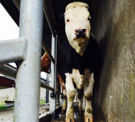 'Beneficial' TB rule change for restricted farmers revealed