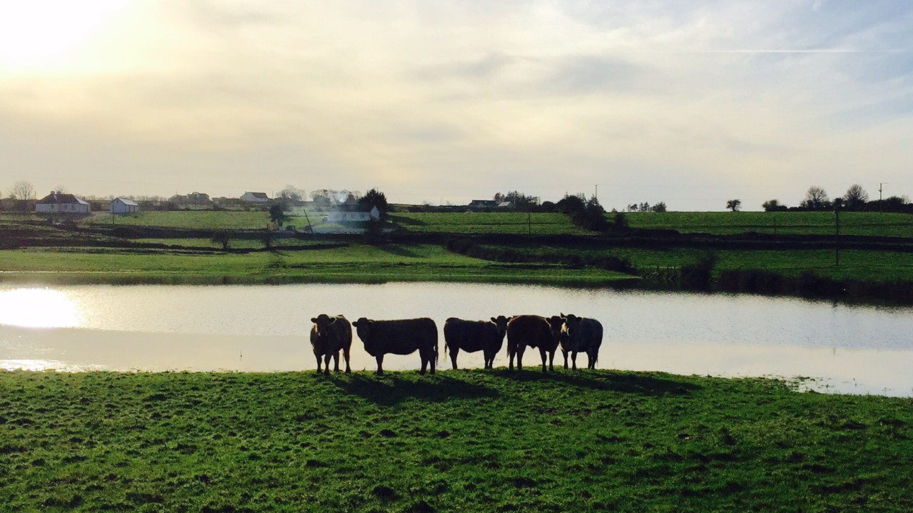 First GLAS payments out to farmers