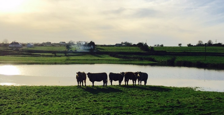 'Farm inspections should be suspended in flooded areas'