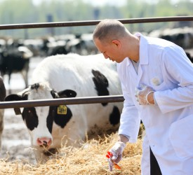 Study shows county breakdown of herd-to-vet proximity