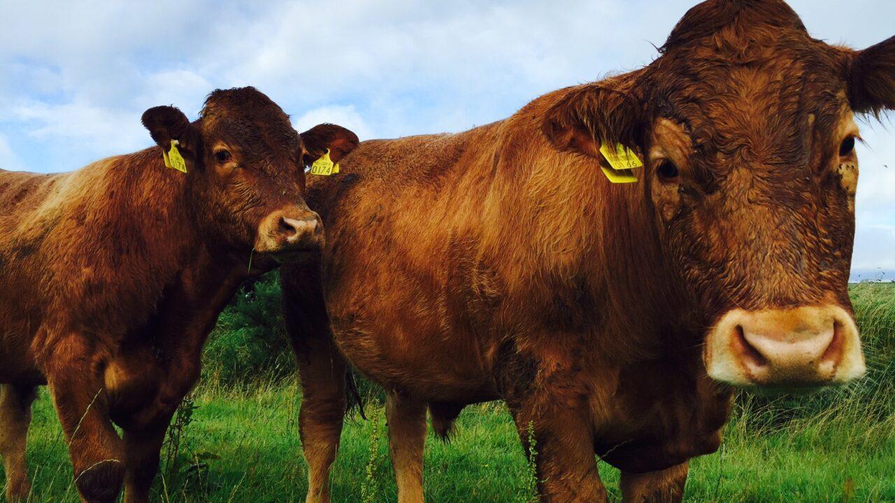 Irish farms' big green advantage boils down to water availability