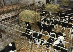 Calf-rearing events drive home one key message to attendees