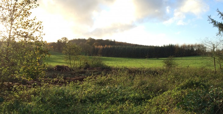 Report says over 2.5m acres of land better suited to forestry than agriculture