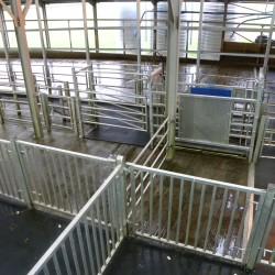 UCD dairy