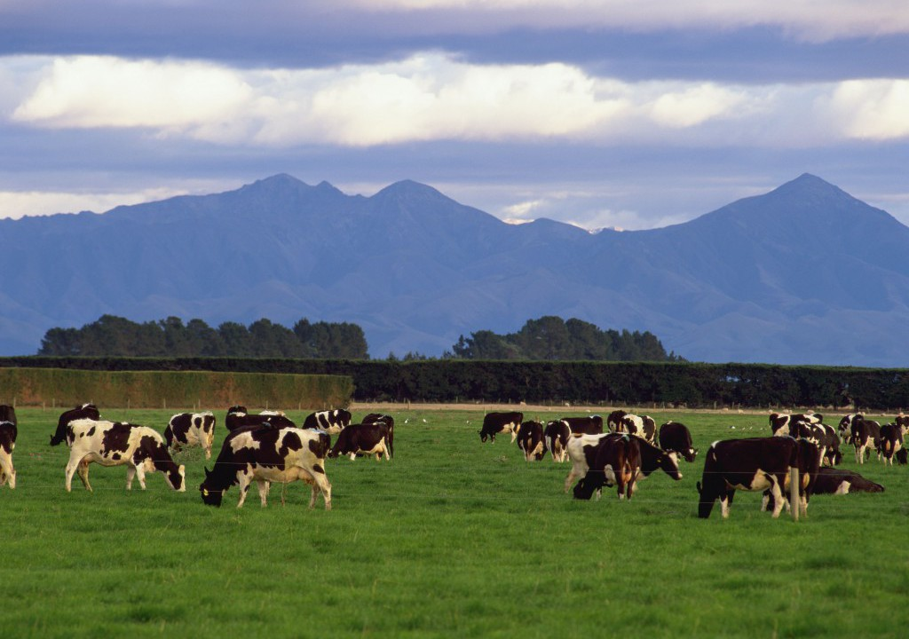 New Zealand dairy farmers hopeful of market conditions improving in 2016