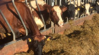 'Potential to double the average milk solids production of all Irish dairy cows'