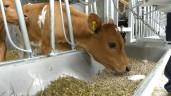 15% of all genotyped animals have parentage errors