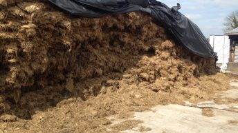 Here's what damage flooding actually does to hay and silage