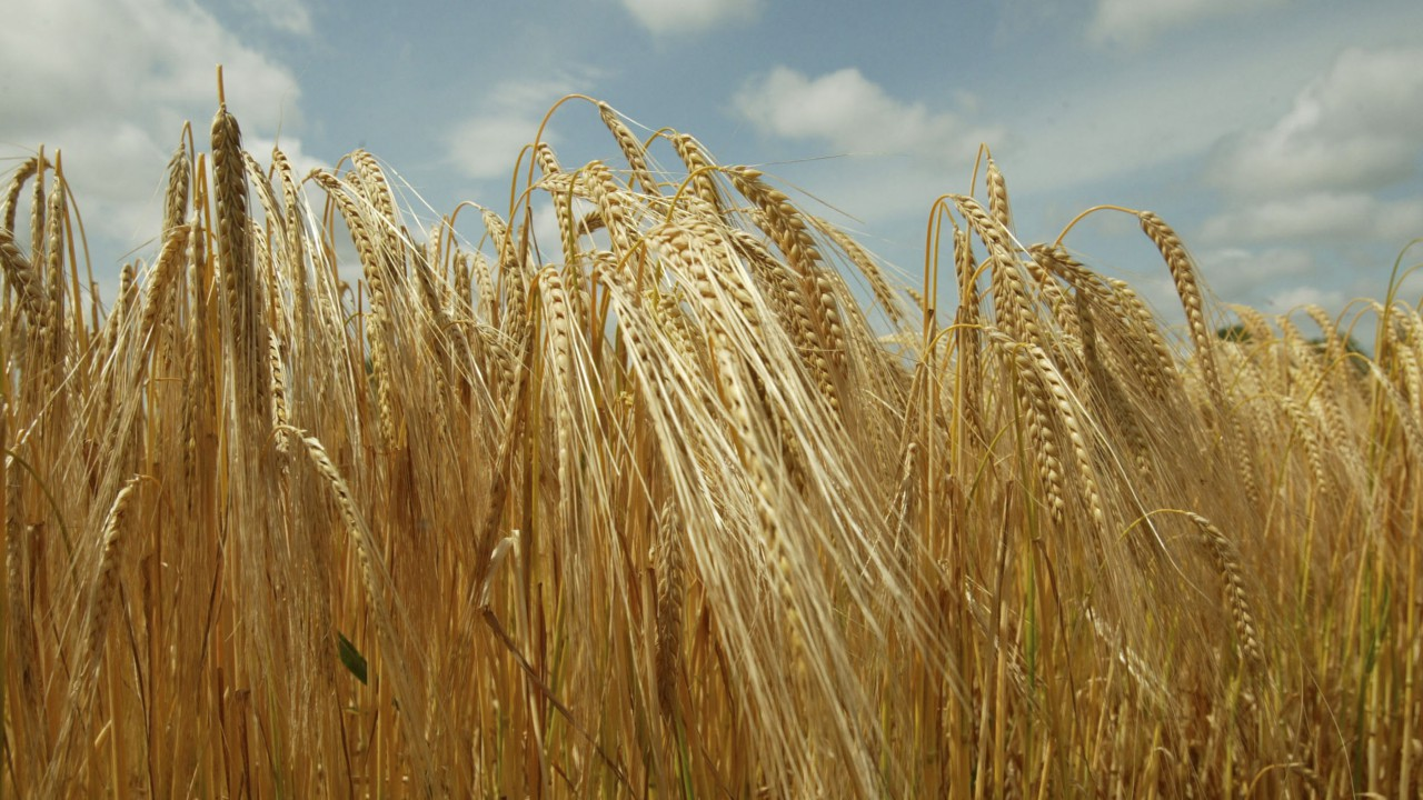 Farmers to find out how to maximise malting barley yields at Teagasc event