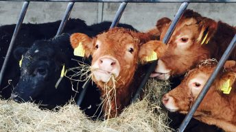 'Slightly reducing the amount of silage fed now could make all the difference next March'