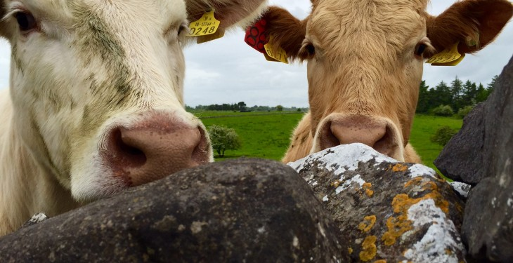 3% rise in European beef production a worry for Ireland – Dawn Meats