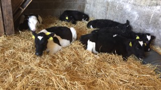 Calf registrations surpass the two million mark