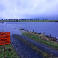Video: Stranded cattle brave floodwaters to join farmer on high ground