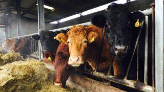 饲料调查:8%的农场冬季出现赤字