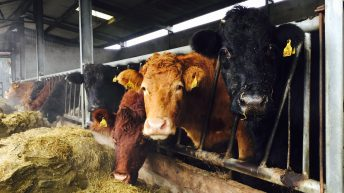 Fodder action group to be established before Christmas