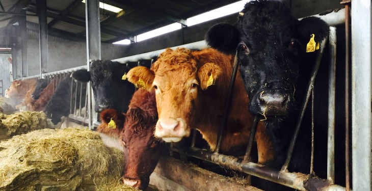 Animal welfare helpline receives just one call linked to fodder shortage